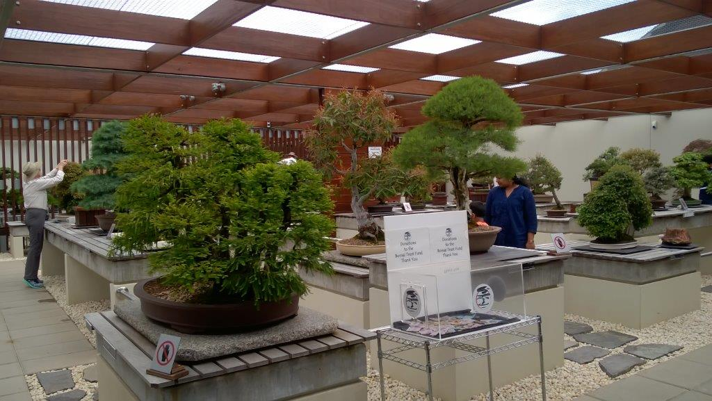 Bonsai Pavillion