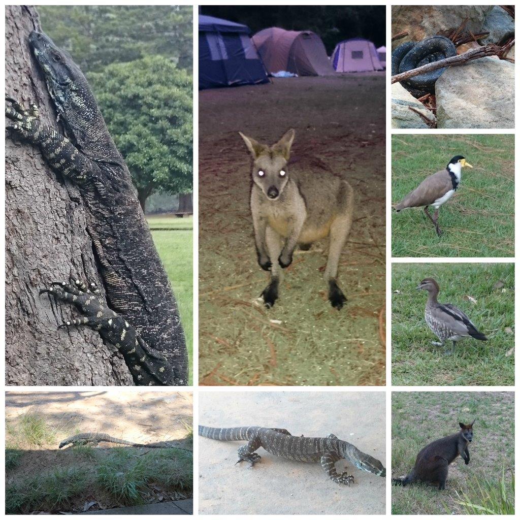 Wildlife at the Basin
