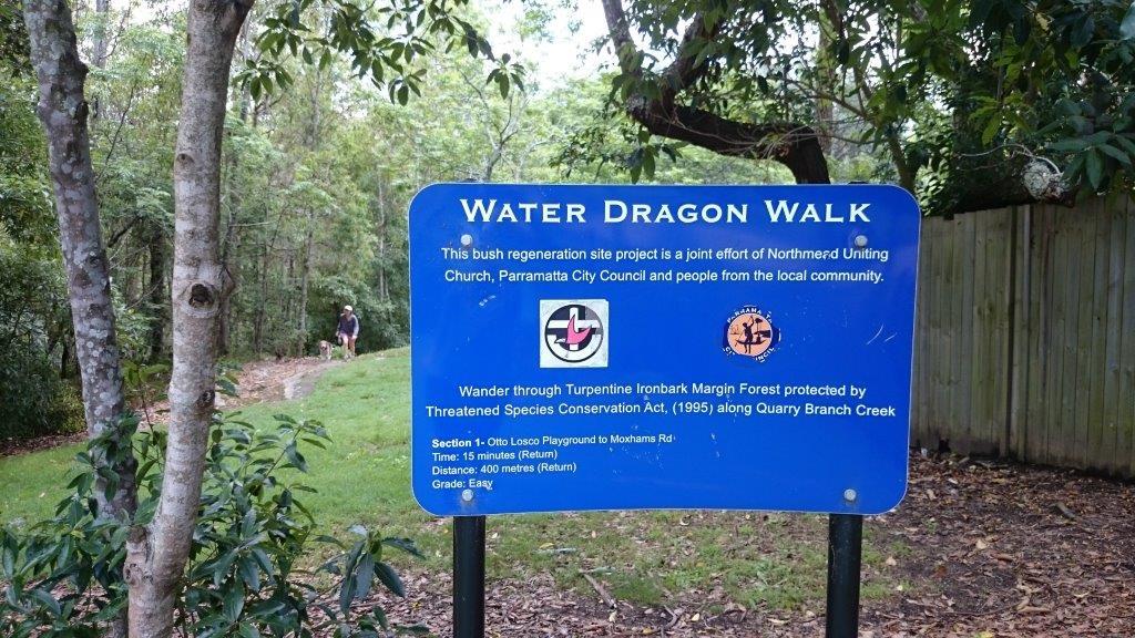 Water Dragon Walk