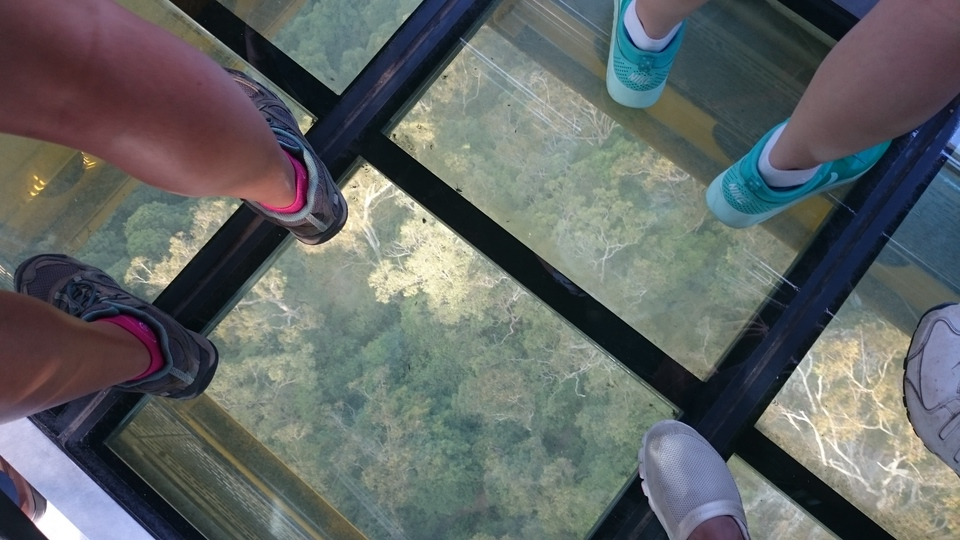 scenic world skyway glass floor