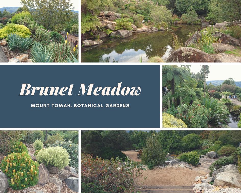 Brunet Meadow
