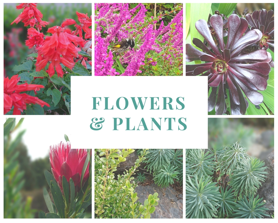 some of the beautiful Flowers and plants you will see at Mount Tomah Blue Mountains