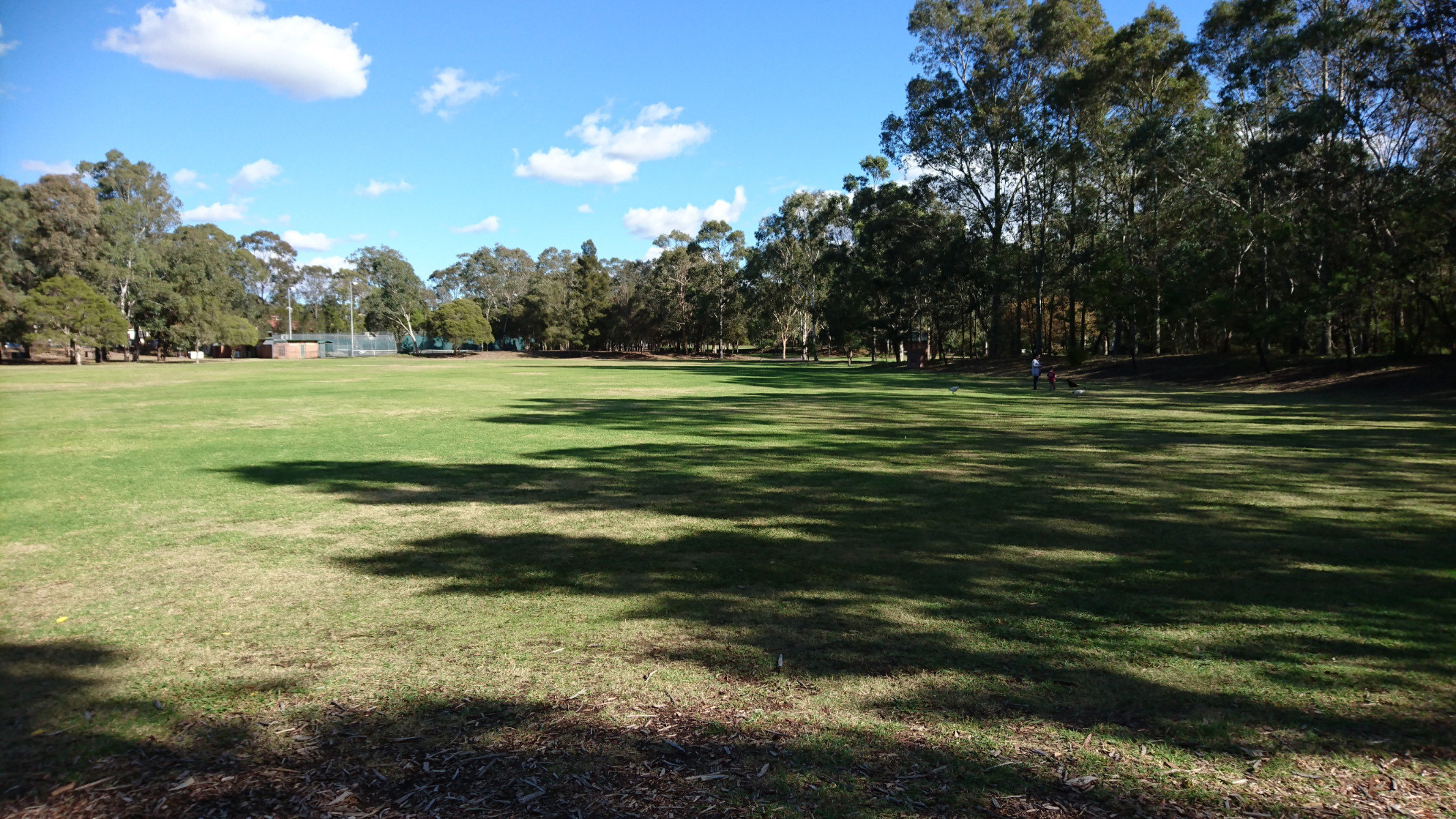 massive open grass - great for a group picnic or kicking a ball around