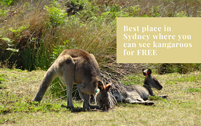 Best park in Sydney where you can see Kangaroos for FREE