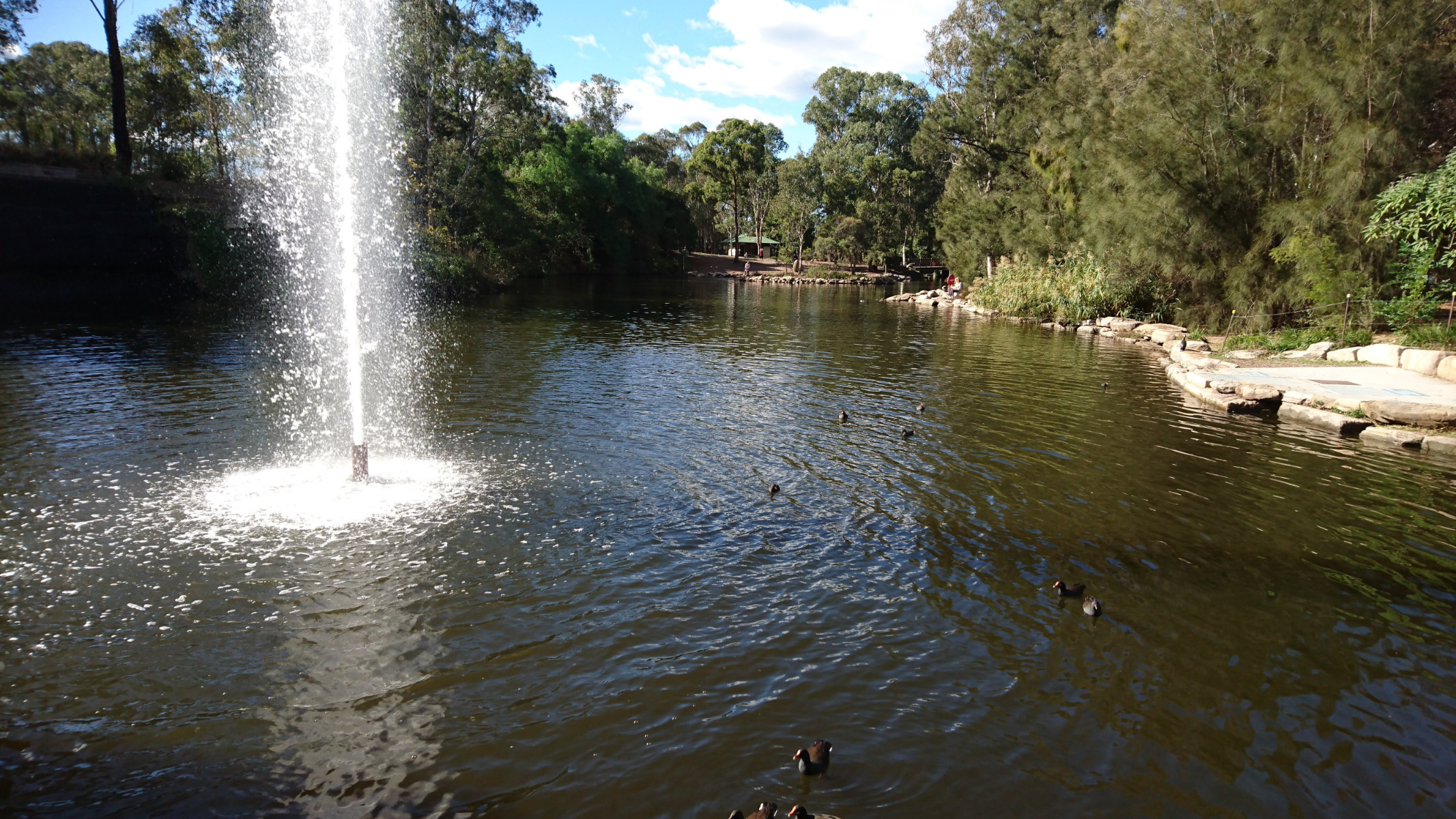 Duck pond and fountains