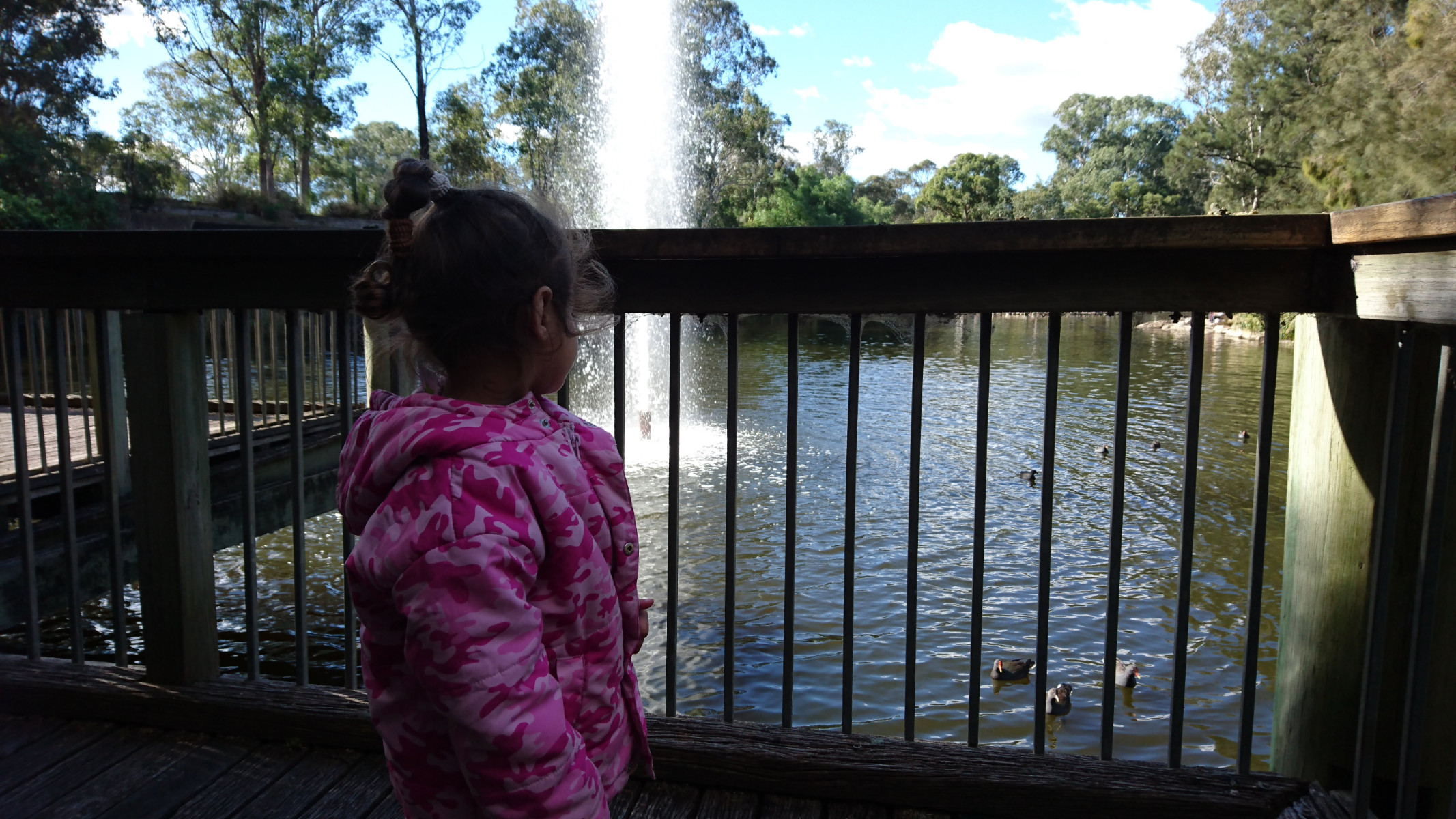 watching the native birds from the viewing platform