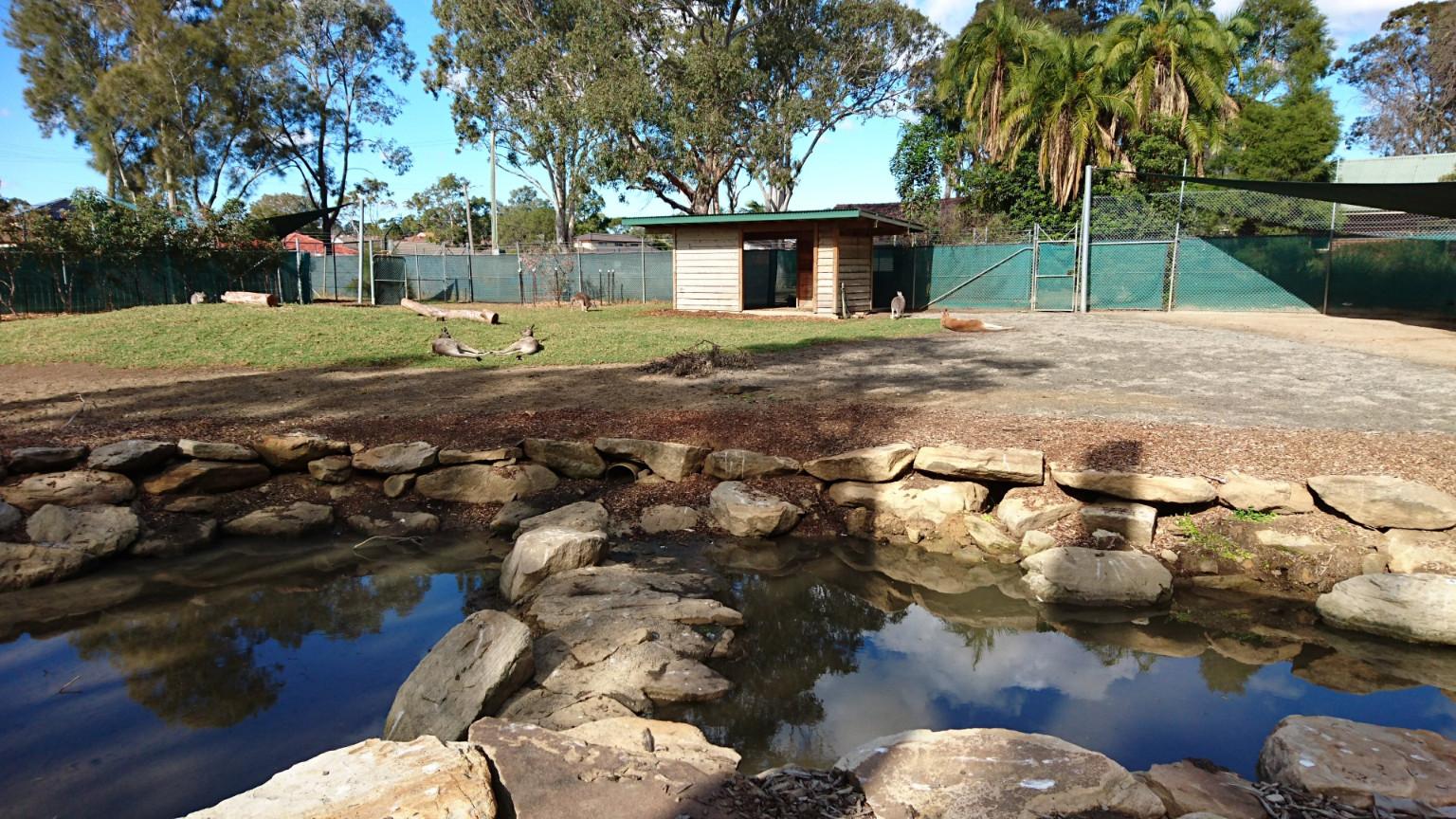 Kangaroo and Wallabies Enclosure