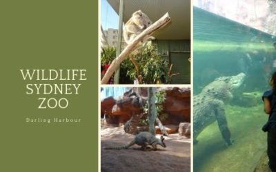Here's what you need to know about visiting Sydney's Wildlife Zoo
